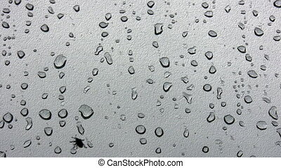 Bug on wet glass