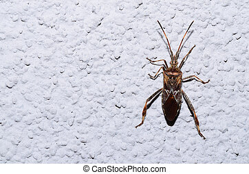 bug on white wall