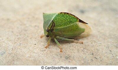 Bug waiting and walking - A bug waiting and walking