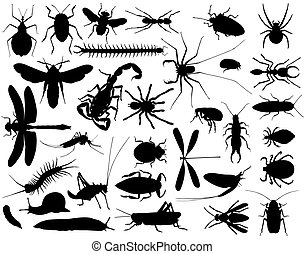 Collection of outlines of insects and other invertebrates