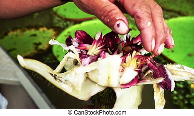 Bugs coming out of a Lotus Flower