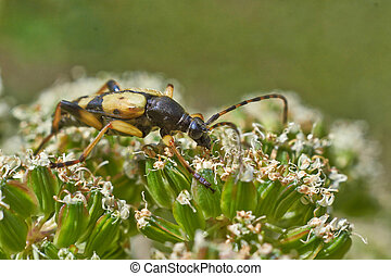 Bugs feed on pollen on flowers .