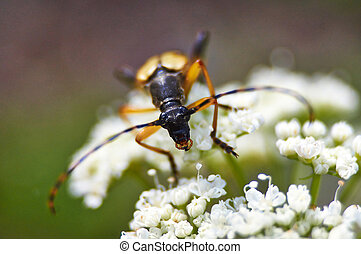 Bugs feed on pollen on flowers.
