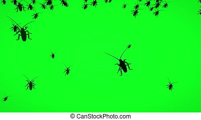 Bugs On Green Screen  Animated Silhouette