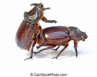 Bugs sex - Sex in the world of bugs and insect. Isolated on ...