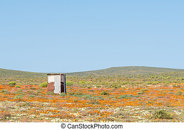 Building in a field of wild flowers at Stofkraal