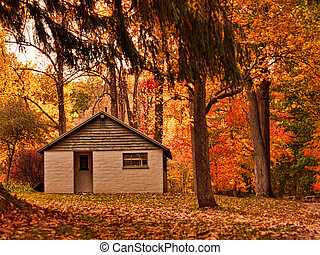 building in autumn woods