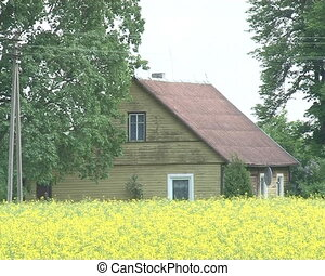 building rapeseed field