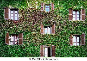 Building wall and windows covered with ivy and vine