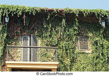Building windows and brick wall with ivy tree.