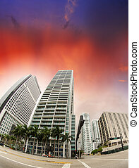 Buildings of Downtown Miami