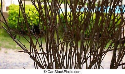 buisson, contre, azur, pool., natation, vert, branchy