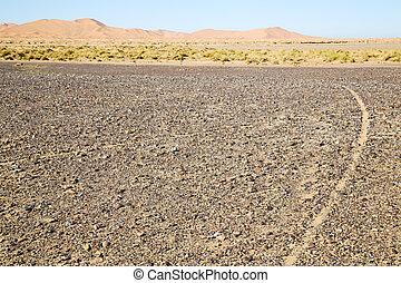 buisson, désert, fossile, vieux, rue