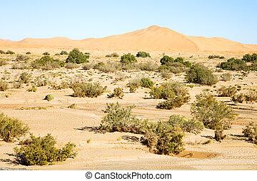 buisson, désert, fossile, vieux, sahara