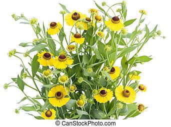 buisson, fleurs, coreopsis