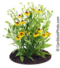buisson, fleurs, coreopsis, lit
