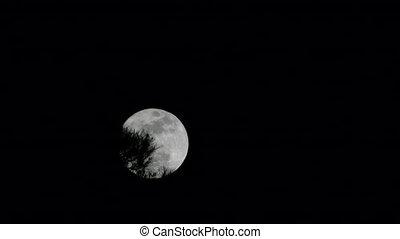 buisson, lune