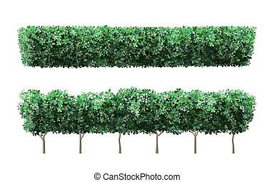 buisson, vecteur, nature, jardin, mignon, fence., arbre, buissons verts, réaliste, arbrisseau, couronne, barrière, illustration, feuillage, flowers., plante, ensemble, saisonnier