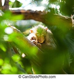 buisson, vert, singe, zoo