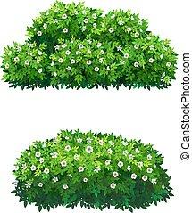 buissons, arbre, couronne, flowers., blanc vert