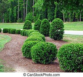 buissons, arbrisseaux