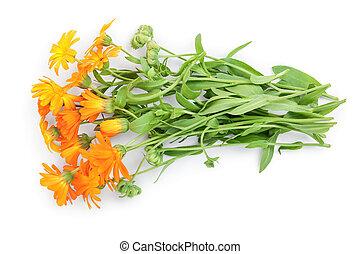 buissons, isolé, fleurs, arrière-plan orange, blanc, calendula