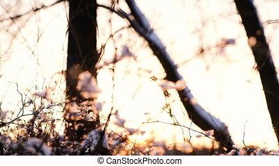 buissons, mouvement, rayons, branches, fond, appareil photo, neige, arbres, haut, coupure, forêt, lent, par, coucher soleil