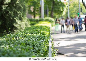buissons, ville, parc vert