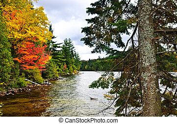 bukás, erdő, és, tó part