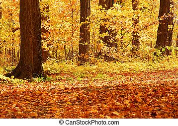 bukás, erdő