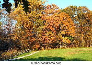 bukás, kerítés, mező, és, út