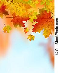 bukás, sárga, juharfa, leaves., eps, 8