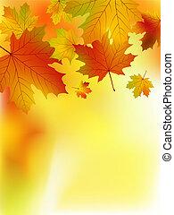 bukás, sárga, juharfa, leaves.