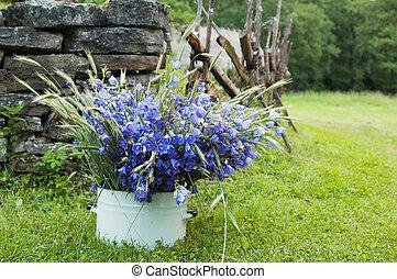 bukett,  amidst, fält, lantlig, Blomstrar, landskap