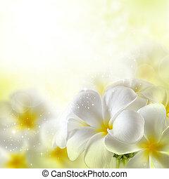 bukett, av, plumeria, blomningen
