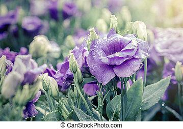 bukiet, od, fiołek, lisianthus, kwiaty