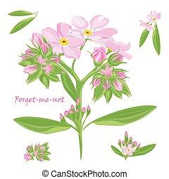 bukiet, różowy, niezapominajka, piękny, komplet, kwiaty