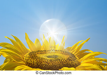 bulb in sunflower with reflections
