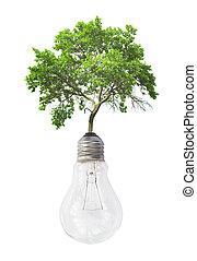 bulbo leve, com, árvore verde, isolado, branco, fundo