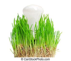 bulbo leve, ligado, capim, symbolizing, verde, energia