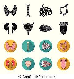 bulbo oculare, stile, rene, icone, nero, simbolo, web., collezione, set, vettore, illustrazione, umano, vescica, organi, tongue., casato