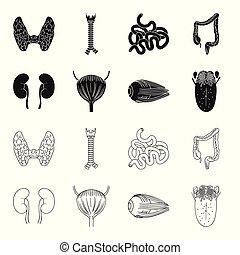 bulbo oculare, stile, rene, icone, simbolo, web., illustrazione, tongue., set, vettore, collezione, umano, nero, organi, vescica, casato