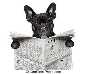 buldog, avis