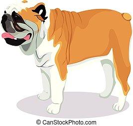buldogue, caricatura, cão