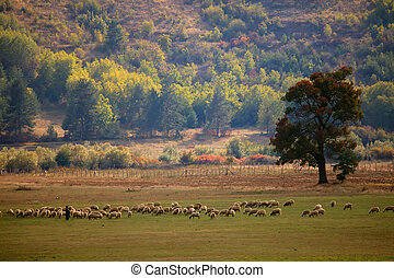 bulgarian autumn farmland