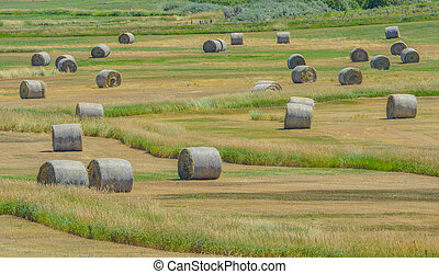 Bulk 1,000 lbs. rolled hay ready to be picked up and send to farmers to feed their livestock in Colorado