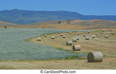 Bulk 1,000 lbs. rolled hay ready to be picked up and send to...