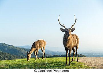 Bulk deer