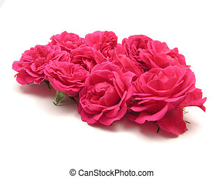 Bulk of pink roses on white background