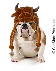 bull dog - bulldog - english bulldog dressed up like a bull ...